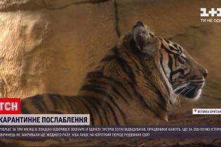 Новини світу: у Лондоні вперше за 3 місяці відкрився зоопарк