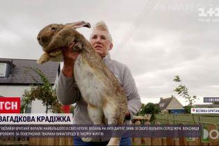 Новини світу: у Британії вкрали найбільшого у світі кроля