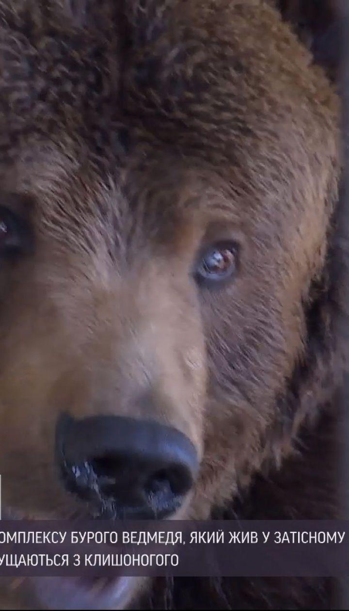Новини України: чому на Прикарпатті зоозахисники забрали з туркомплексу бурого ведмедя