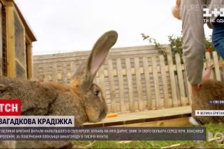 Новини світу: у Британії вкрали найбільшого кроля світу