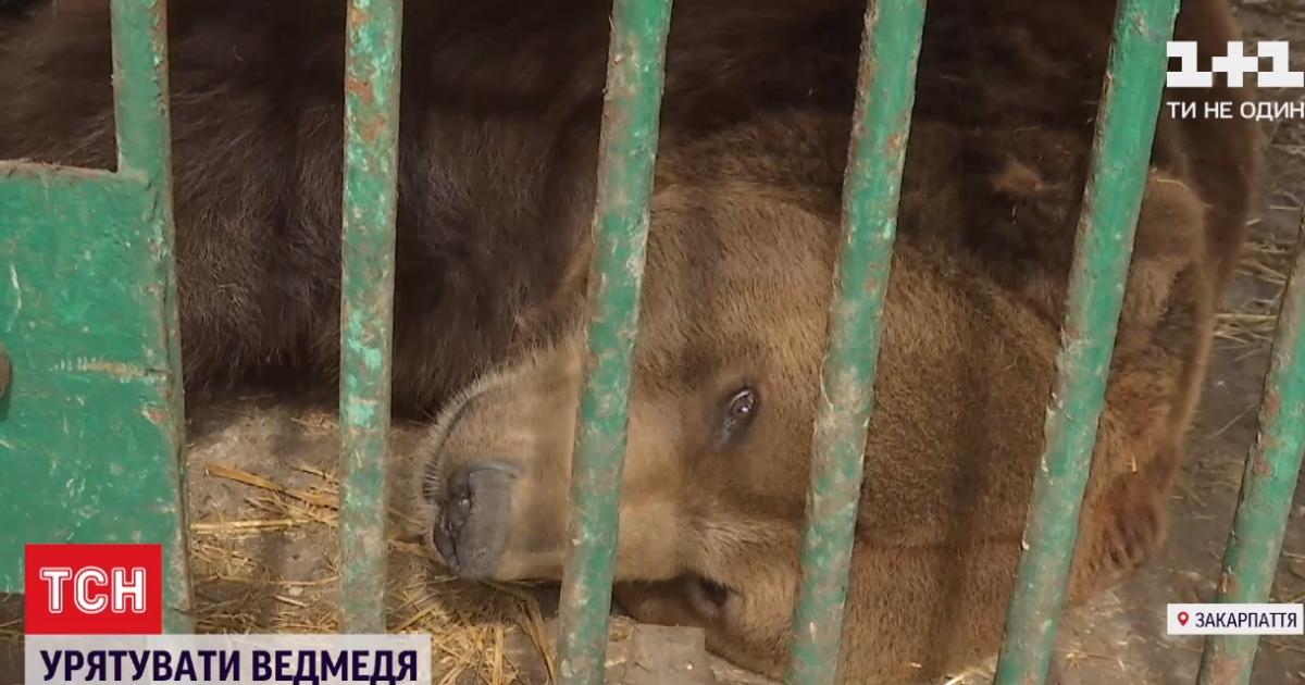 На Прикарпатті ведмедя врятували з туркомплексу та відвезли до реабілітаційного центру