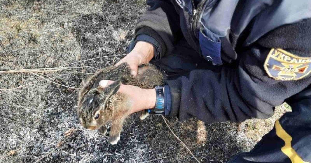 Ледь не згоріло живцем: у Харкові врятували зайченя, яке потрапило у вогняну пастку