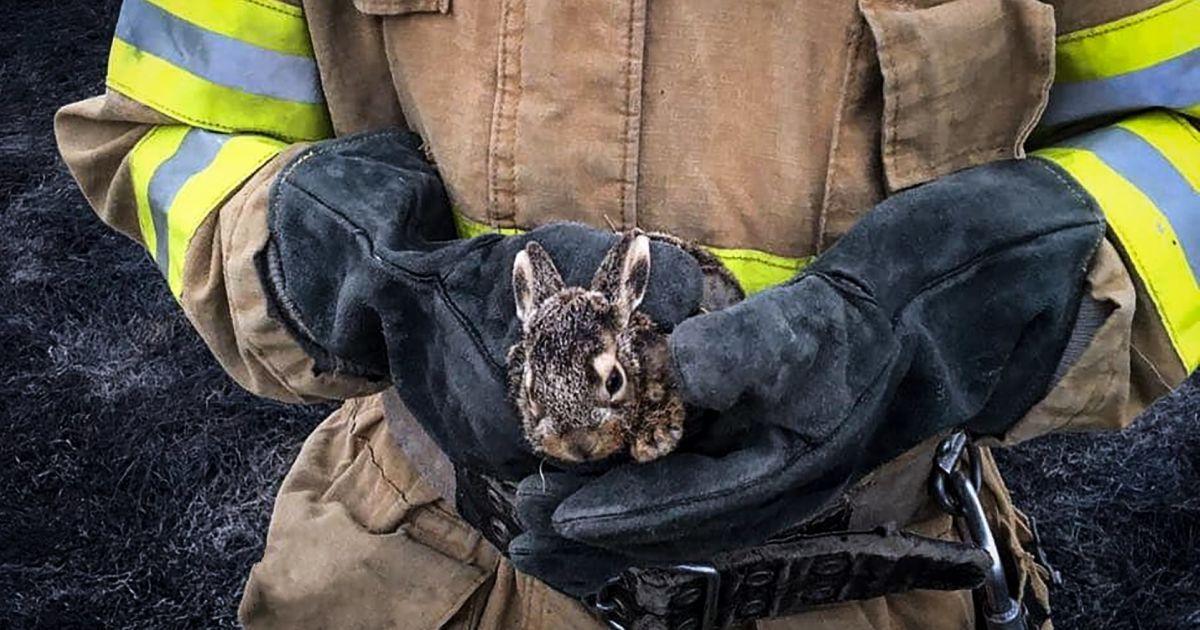Одному пощастило вижити: тернопільські рятувальники під час пожежі врятували зайченя (фото)