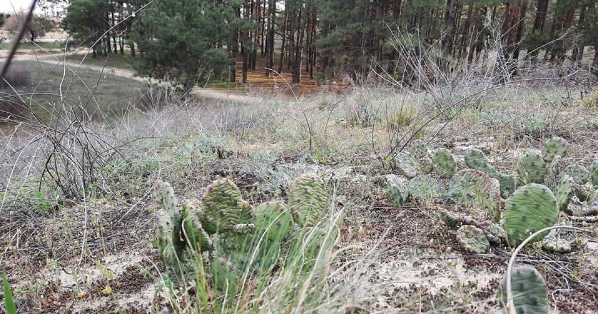 У херсонському лісі знайшли нетипові для України рослини (фото)