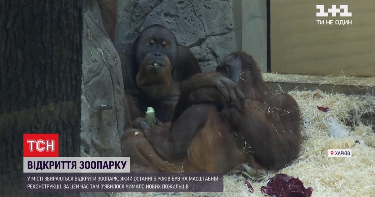 Харків готується до відкриття оновленого зоопарку: коли почнуть приймати відвідувачів і чим дивуватимуть їх