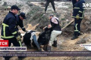 Новости Украины: в Житомирской области спасли корову, которая провела в глубокой яме более суток