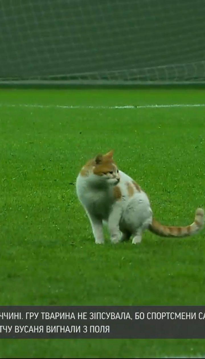 Новини світу: кіт увірвався на футбольний матч у Туреччині