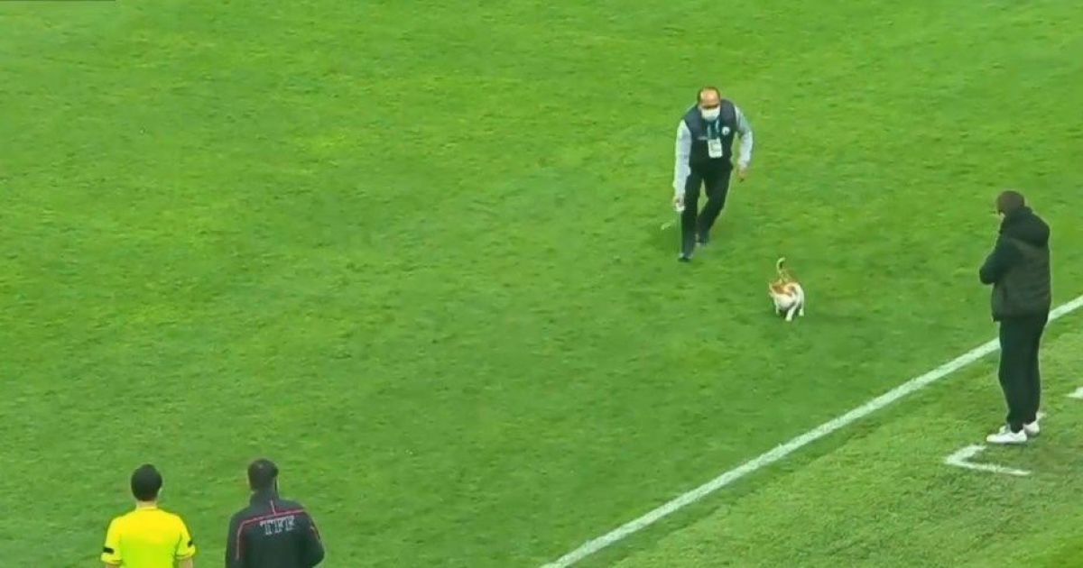 Игру не испортил: кот ворвался на футбольное поле в Турции и стал звездой матча (видео)