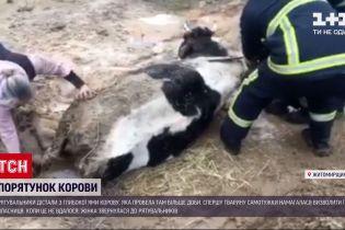Новости Украины: в Житомирской области из глубокой ямы вытащили корову