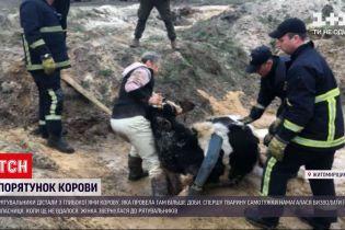 Новости Украины: в Житомирской области спасатели достали корову из глубокой ямы