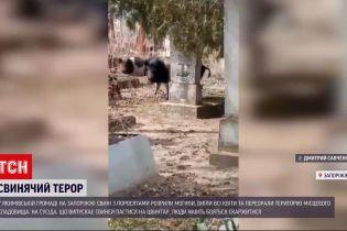 Новости Украины: в Запорожской области домашние кабаны перерыли кладбище