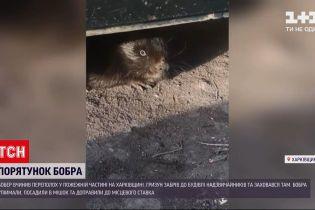 Новини України: у Харківській області бобер забрів до будівлі надзвичайників