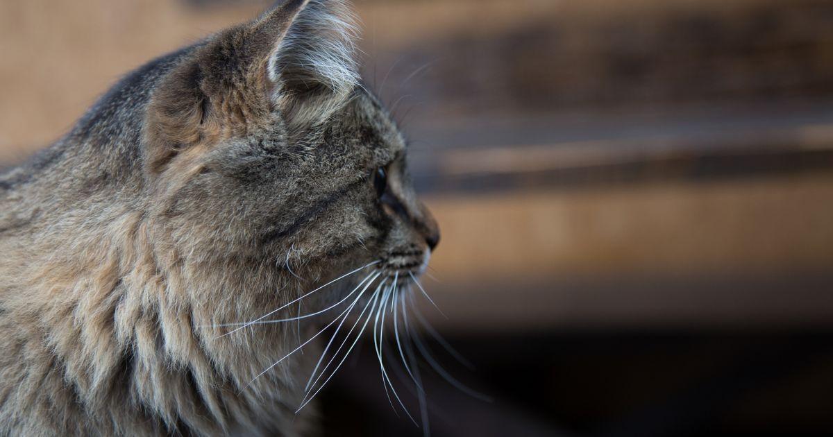 У Рівненській області горів притулок для тварин: загинули 24 коти та 2 собаки