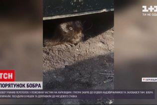 Новости Украины: в Харьковской области бобр атаковал пожарную часть