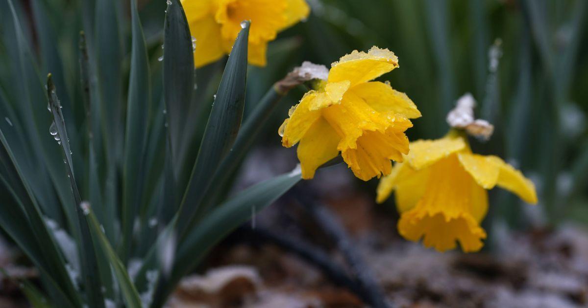 Народні прикмети, обряди і звичаї 20 квітня
