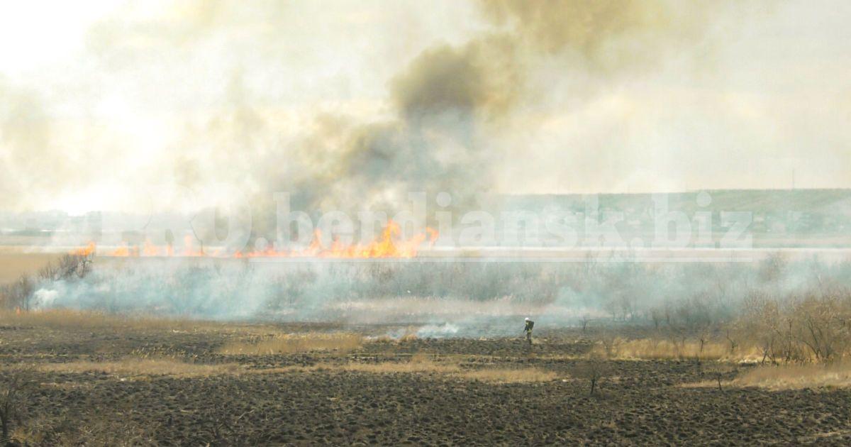Поблизу Бердянська підлітки спалили гектари заповідної території