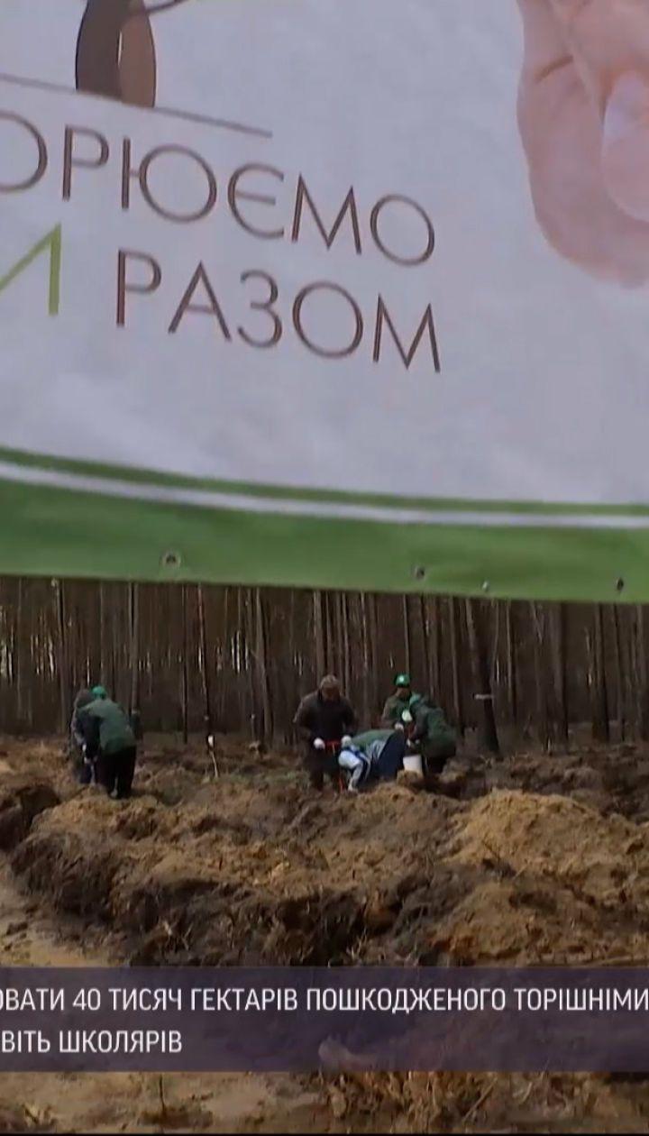 Новости Украины: в Житомирской области восстанавливают 40 тысяч гектаров поврежденного леса