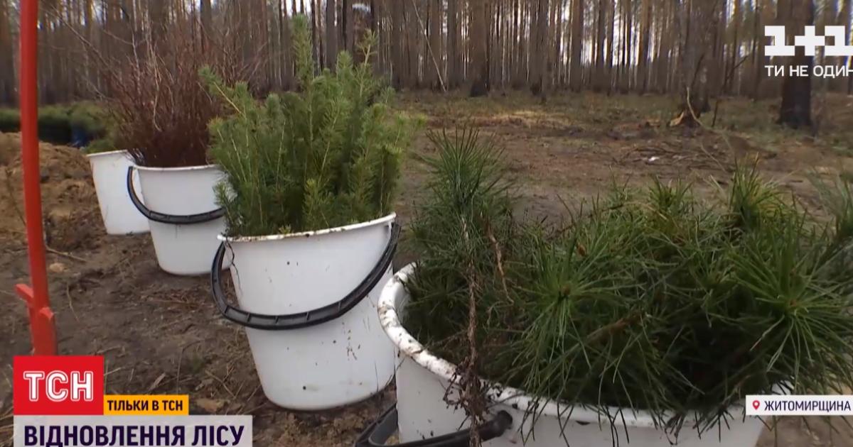В Житомирской области восстанавливают 40 тыс. гектаров леса, уничтоженного пожарами