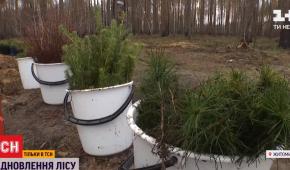 У Житомирській області відновлюють 40 тисяч гектарів лісу, знищеного пожежами