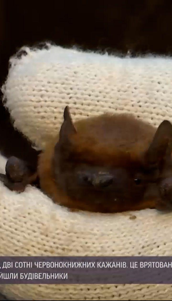 Новини України: в Івано-Франківську випустили на волю понад дві сотні червонокнижних кажанів