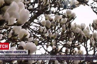 Новости Украины: в столичном ботсаду расцвели первые магнолии