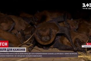 Новости мира: в Ивано-Франковске выпустили на волю более 200 краснокнижных летучих мышей