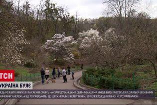 Новости Украины: где можно насладиться цветением магнолий и сакур