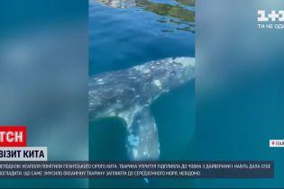 Новости мира: неподалеку итальянского Неаполя заметили гигантского серого кита