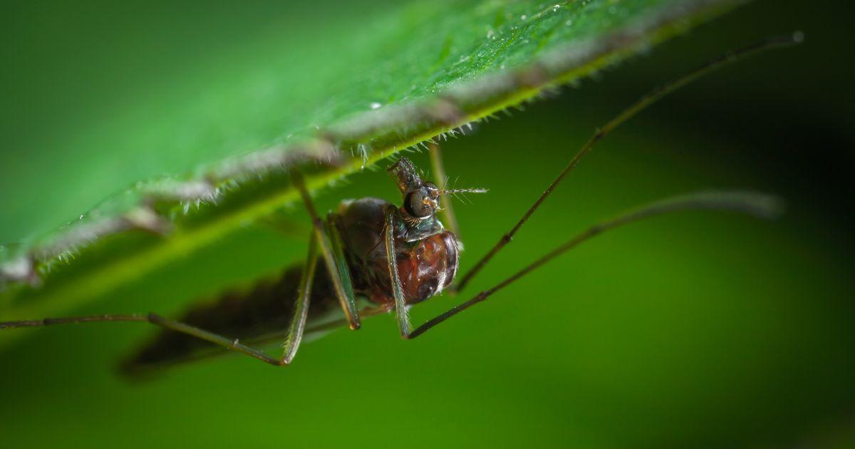 В Полтавской области обнаружили завезенный случай малярии