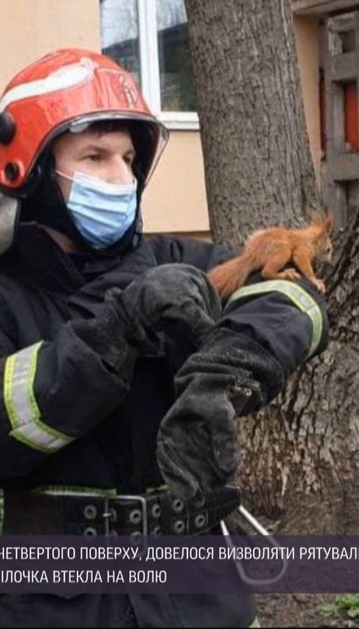 Новини України: у Кропивницькому вогнеборці рятували білочку, яка застрягла обшивці балкона