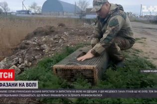 Новости Украины: в Одесской области вырастили и выпустили на волю почти сотню румынских фазанов