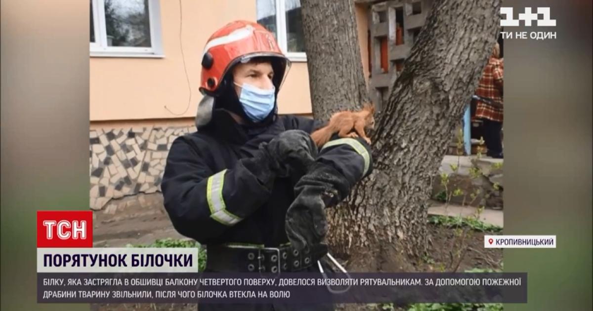 У Кропивницькому рятувальники визволили білочку, яка застрягла в обшивці балкона четвертого поверху