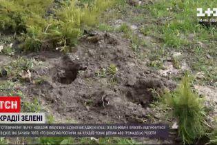 Новости Украины: в столичном парке неизвестные украли только что высаженные кусты
