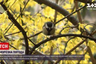 Новости Украины: синоптики прогнозируют заморозки в конце апреля