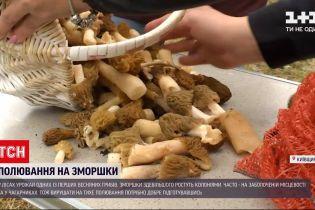 Новости Украины: как новичкам собирать урожай грибов сморчков