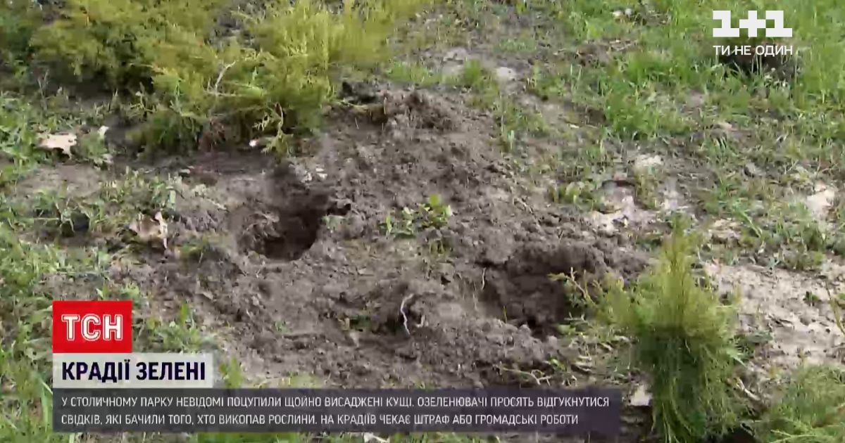 В Києві невідомі вкрали 16 щойно висаджених кущів