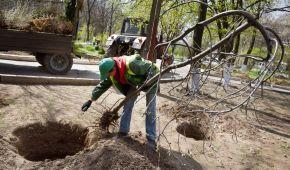 В Україні встановили світовий рекорд з озелененняПланети: за день висадили понад 4 мільйони дерев