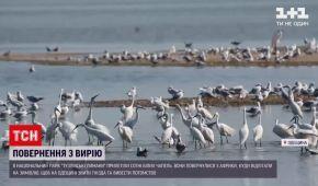 """До парку """"Тузлівські лимани"""" в Одеській області прилетіли білі чаплі: відео"""