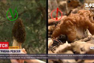 Новости Украины: почему первые весенние грибы могут быть опасными