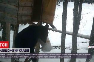 Новости мира: в одном из румынских лесничеств медведь украл мешок кукурузы