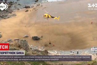 Новини світу: іспанські надзвичайники рятували величезного бугая гелікоптером