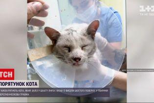 Новости Украины: в Киеве спасли кота, который упал в подвал с лифтовой шахты