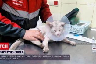 Новини України: у багатоповерхівці Києва рятували кота, який упав у підвал з висоти шостого поверху