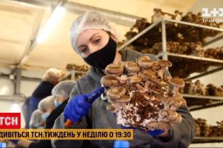 ТСН.Тиждень расскажет, как выращивать и готовить экзотические грибы