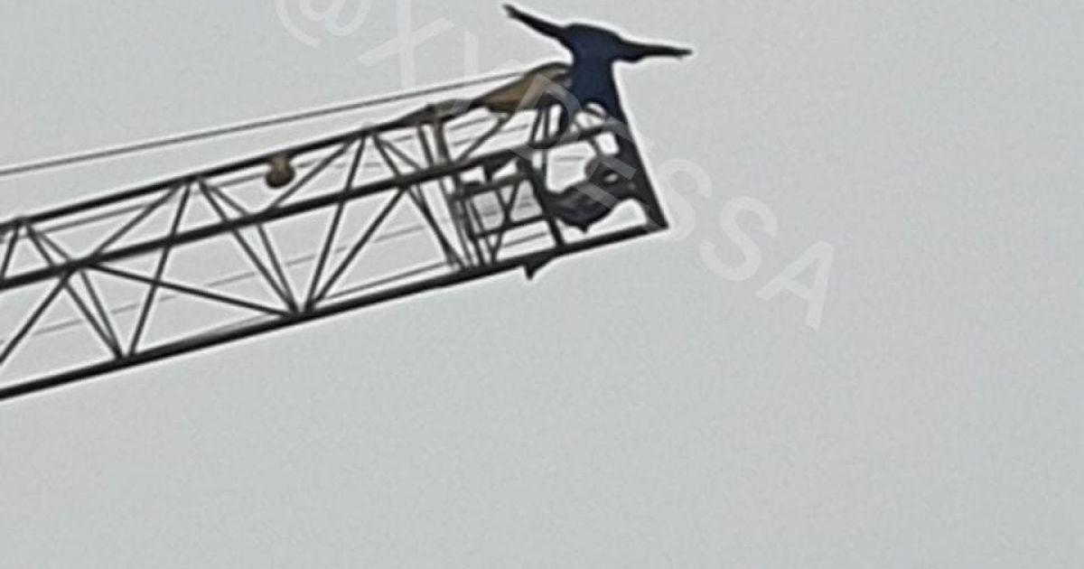 В Одесі чоловік заліз на висотний кран і ледь не стрибнув донизу: відео