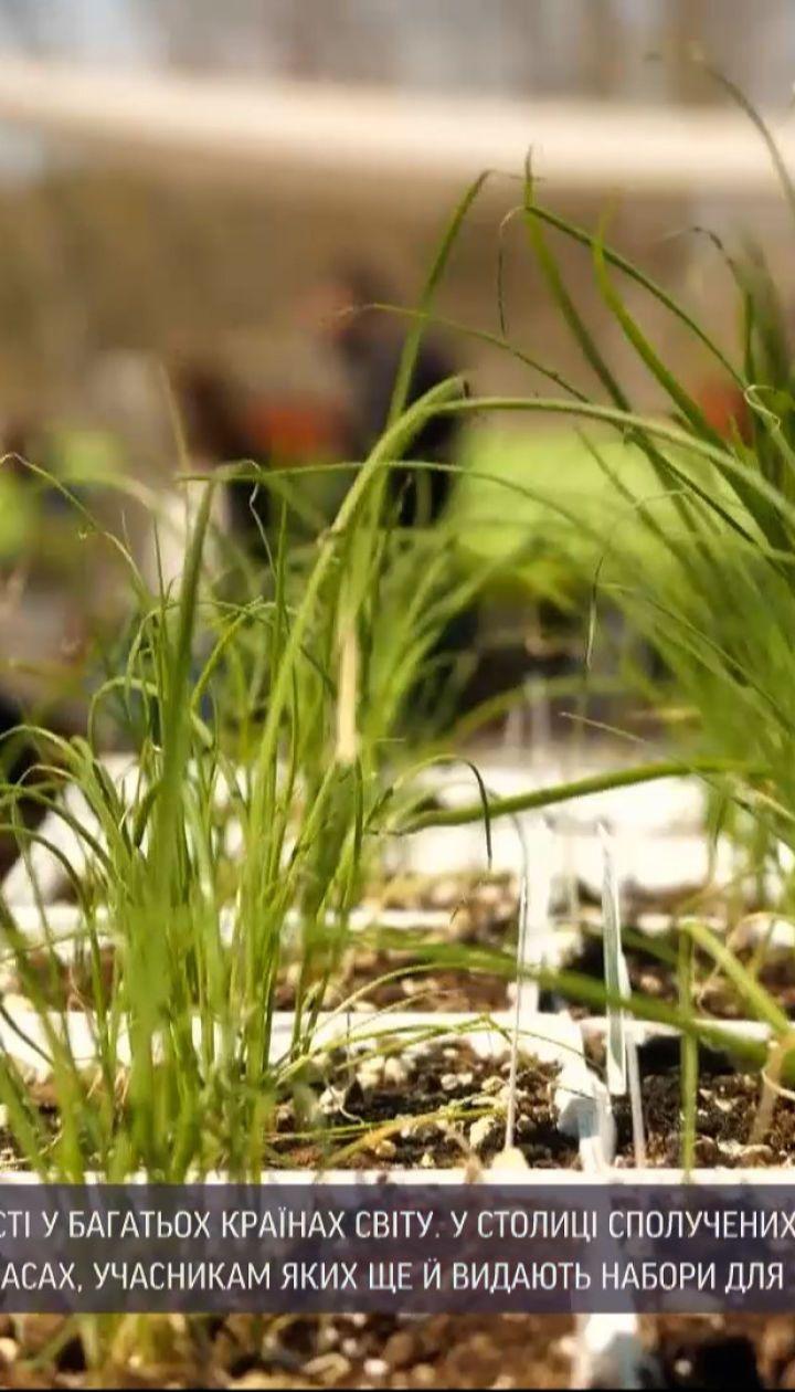 Новини світу: американська ферма на даху, або як жителі мегаполісів вирощують городину на висоті