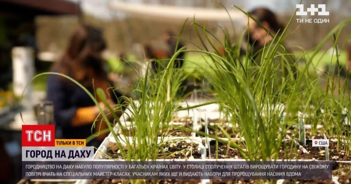Овощи в тренде: в США зелень выращивают на крышах мегаполисов