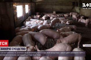 Новости Украины: в Запорожской области мужчина устроил свиноферму просто среди жилых домов