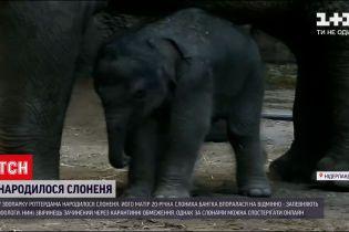 Новини світу: у зоопарку Роттердама народилося слоненя