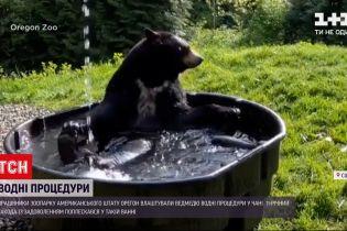 Новини світу: Мережею шириться відео, як ведмідь з американського зоопарку приймає водні процедури